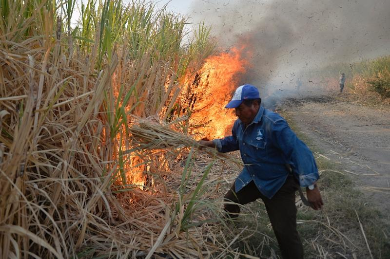 A Mexican farmer in the state of Puebla sets fire to a sugar cane grove before cutting down the scorched stalks for processing (AFP Photo/PEDRO PARDO)