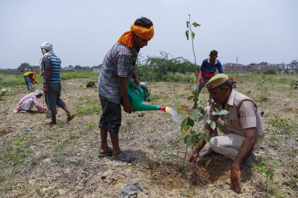 An Indian laborer pours water as they plant saplings as part of an annual tree plantation campaign on the outskirts of Prayagraj, in northern Uttar Pradesh state, India, Sunday, July 4, 2021. (AP Photo/Rajesh Kumar Singh)