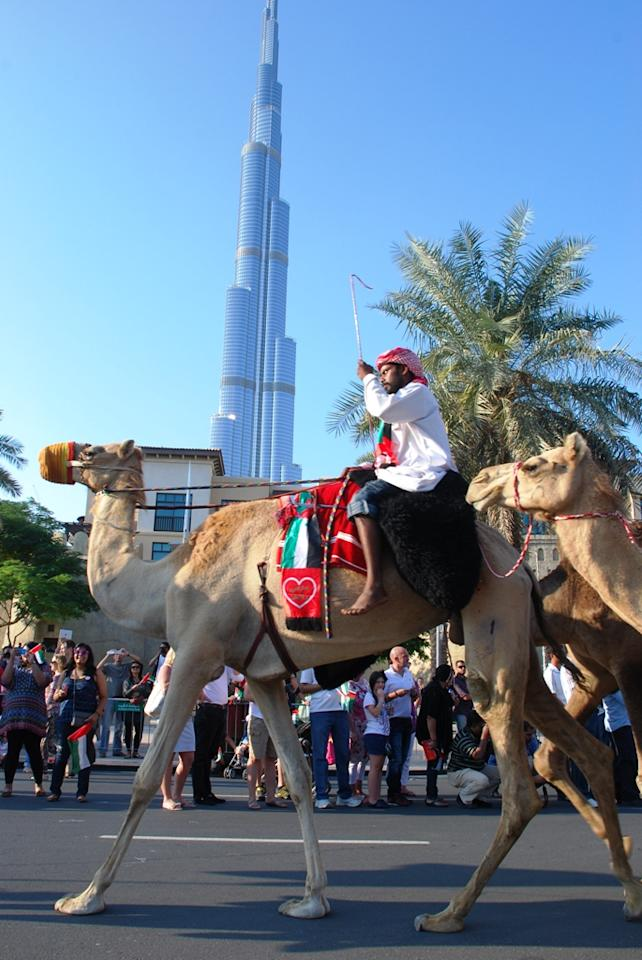 Several camels, also donning the UAE colours, were led along the parade. (Photo: Donna.M.Bee.Photography)