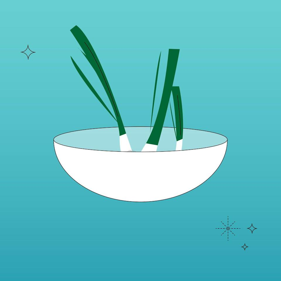 """<p>Green onions are the fastest plants to regrow. And they're the easiest! Simply place the root plus about 1"""" of the white part into a shallow bowl or jar. Fill it with enough water to reach about halfway up the white part. Change the water every 2 to 3 days. You'll start to see growth by the very next day and you'll have usable greens around the 1 week mark!</p>"""