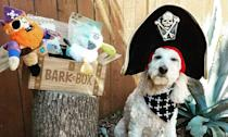 """<p><strong>BarkBox</strong></p><p>barkbox.com</p><p><strong>$89.00</strong></p><p><a href=""""https://go.redirectingat.com?id=74968X1596630&url=https%3A%2F%2Fwww.barkbox.com%2Fproducts%2F3-month-barkbox%3Fgclid%3DCjwKCAiA8qLvBRAbEiwAE_ZzPWWVsiAF6zmbtc01ekZkwPKiyPHX73LJ6C50bQTMkJFmMUirZ4P72xoCpkUQAvD_BwE&sref=https%3A%2F%2Fwww.harpersbazaar.com%2Ffashion%2Ftrends%2Fg25047818%2Fbest-subscription-boxes-for-women%2F"""" rel=""""nofollow noopener"""" target=""""_blank"""" data-ylk=""""slk:Shop Now"""" class=""""link rapid-noclick-resp"""">Shop Now</a></p><p>There's always that one person in every friend group who can't stop talking about their dog. Consider giving them a gift that shows just how much you value them and their top canine. A subscription box from BarkBox offers two toys, two full bags of treats, and one """"all-natural drool-worthy chew.""""</p><p><strong>Cost:</strong> Starts at $89 </p>"""