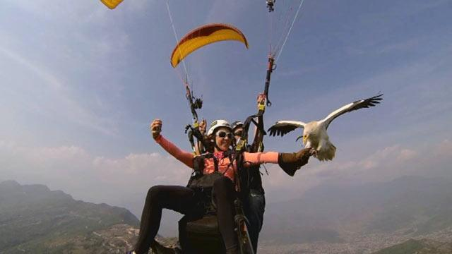 Parahawking: Paragliding With Vultures in Nepal