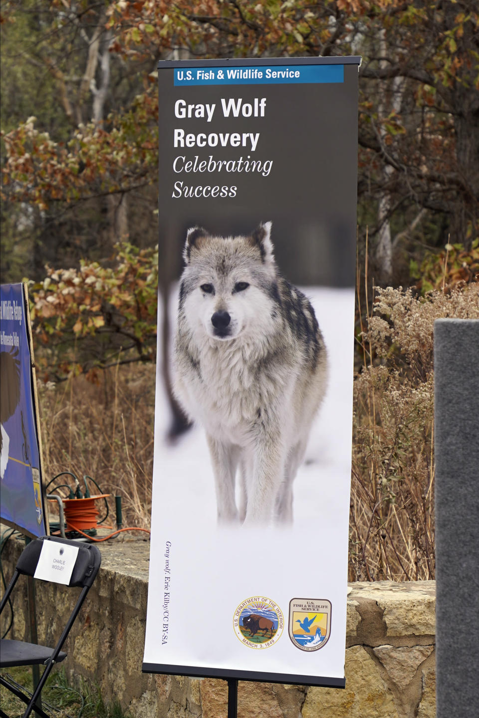 """A photos of a gray wolf is displayed near the podium where Interior Secretary David Bernhardt announced the gray wolf's recovery """"a milestone of success during a stop at the Minnesota Valley National Wildlife Refuge, Thursday, Oct. 29, 2020, in Bloomington, Minn. The move stripped Endangered Species Act protections for gray wolves in most of the U.S., ending longstanding federal safeguards and putting states and tribes in charge of overseeing the predators. (AP Photo/Jim Mone)"""
