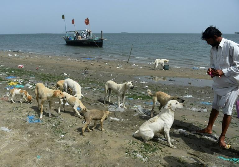 It is not known for sure who first brought dogs to the islands, but fishermen believe they were transported by villagers along the coastal areas seeking to save them from the cull of feral animals in Karachi