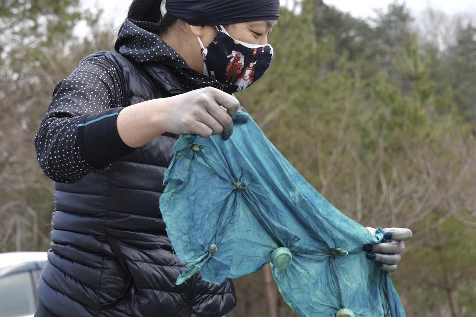 In this image from video, Makie Hayashi, 46, a member of Japan Blue, oxidizes an indigo-dyed handkerchief at a community center which was used as an evacuation center when the massive earthquake hit the area in 2011, in Minamisoma, Fukushima Prefecture, northeastern Japan, on Feb. 21, 2021. Because of radiation released by the Fukushima nuclear plant disaster a decade ago, farmers in nearby Minamisoma weren't allowed to grow crops for two years. After the restriction was lifted, two farmers found an unusual way to rebuild their lives and help their destroyed community. They planted indigo and soon began dying fabric with dye produced from the plants. A group called Japan Blue holds workshops that have taught indigo dyeing to more than 100 people each year. (AP Photo/Chisato Tanaka)