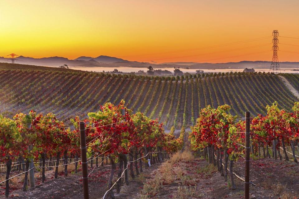 """<p><strong>Where to go:</strong> It's always a good time of year to embark on a Napa Valley wine tour, but the changing colors of the vineyards in the fall will make your tasting that much sweeter. <br></p><p><strong>When to go: </strong>Late October or Early November</p><p><a class=""""link rapid-noclick-resp"""" href=""""https://go.redirectingat.com?id=74968X1596630&url=https%3A%2F%2Fwww.tripadvisor.com%2FHotels-g580460-Napa_Valley_California-Hotels.html&sref=https%3A%2F%2Fwww.redbookmag.com%2Flife%2Fg34045856%2Ffall-colors%2F"""" rel=""""nofollow noopener"""" target=""""_blank"""" data-ylk=""""slk:FIND A HOTEL"""">FIND A HOTEL</a></p>"""