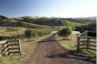 <p>There are hills (and vineyards) as far as the eye can see on Waiheke Island.</p>