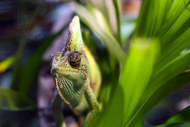 Reptiles vulnerable to unscrupulous pet trading: study