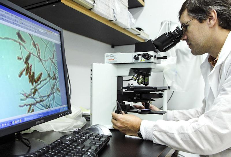 Shawn Lockhart looks at the meningitis-causing fungus Exserohilum rostratum at the mycotic lab at the Centers for Disease Control and Prevention on Oct. 12, 2012 in Atlanta. The staff and technicians have been working around the clock to confirm cases and inform the public regarding the multi-state meningitis outbreak that has resulted in 14 deaths. The fungal outbreak is believed to have started at New England Compounding Center where a steroid injection shipment was contaminated with the fungus. (AP Photo/Pouya Dianat)