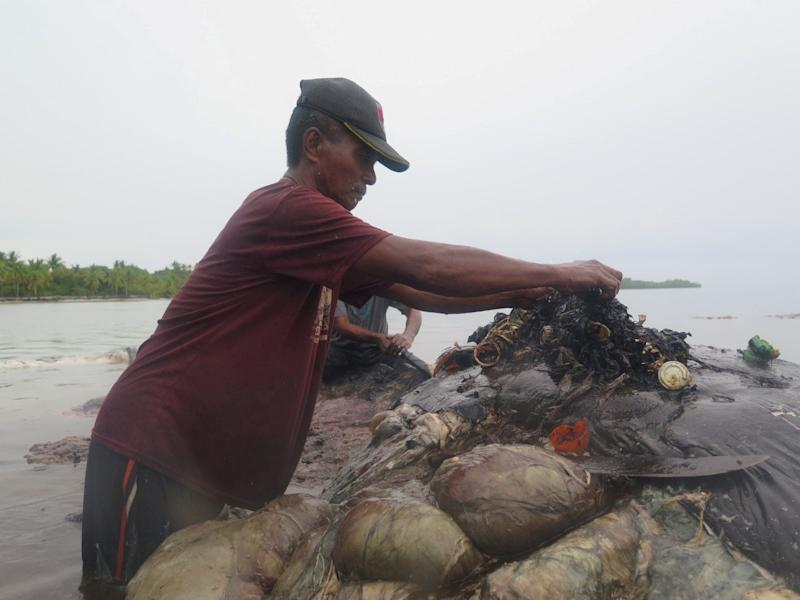A man collects plastic items from a whale's belly, in Wakatobi