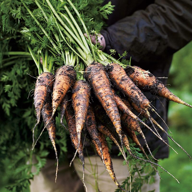 Carrots grown in the grounds. - Credit: Andrew Montomgery