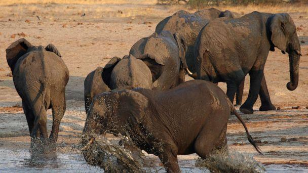 FILE PHOTO: A group of elephants are seen at a watering hole inside Hwange National Park, in Zimbabwe, October 23, 2019.  (Philimon Bulawayo/Reuters)