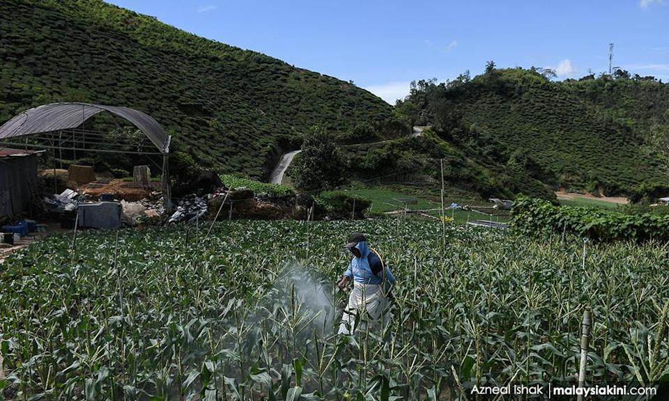 Cameron Highlands farms can now operate in EMCO areas - minister