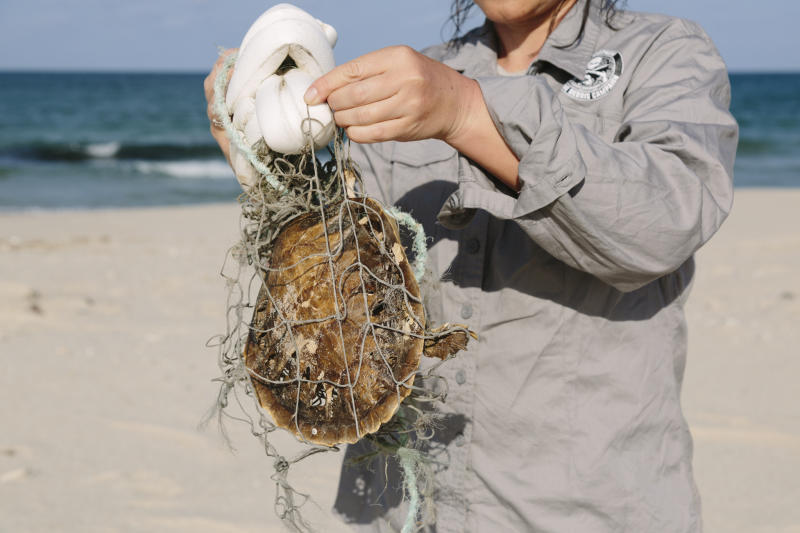 Against a beach backdrop, a volunteer holds up a dead sea turtle found entangled in netting.