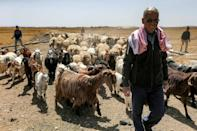 Syrian farmer Mohammad Saasaani used to take his herds as far away as the city of Palmyra