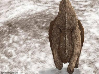 Climate change wiped out Siberia's woolly brown rhinos 14,000 years ago, study of 14 fossils reveals