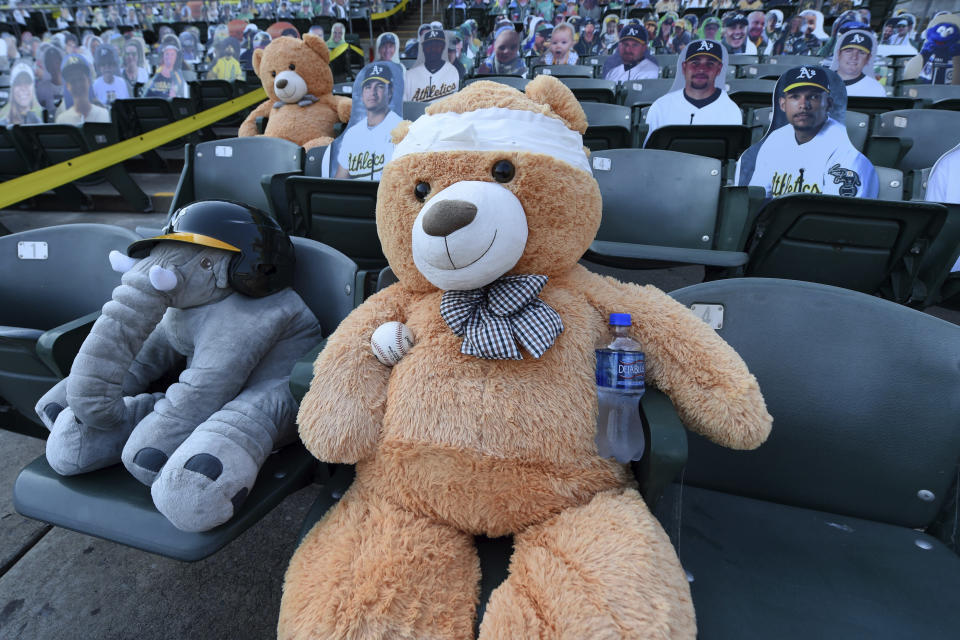 T. Bear holds a ball while sitting in his seat before the Oakland Athletics against the Los Angeles Angels game at the Coliseum in Oakland, Calif., Friday, Aug. 21, 2020. T. Bear was drilled in the noggin with a liner off the bat of Arizona's Ketel Marte but bounced right back up with a smile on its face. (Jose Carlos Fajardo/Bay Area News Group via AP)
