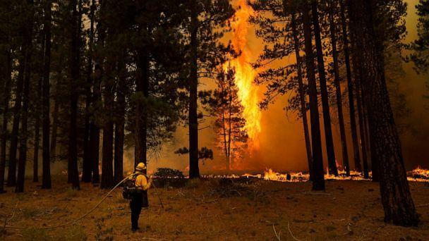 PHOTO: A tree flares up as firefighters continue to battle the Caldor Fire near South Lake Tahoe, Calif., Tuesday, Aug. 31, 2021. (Jae C. Hong/AP)