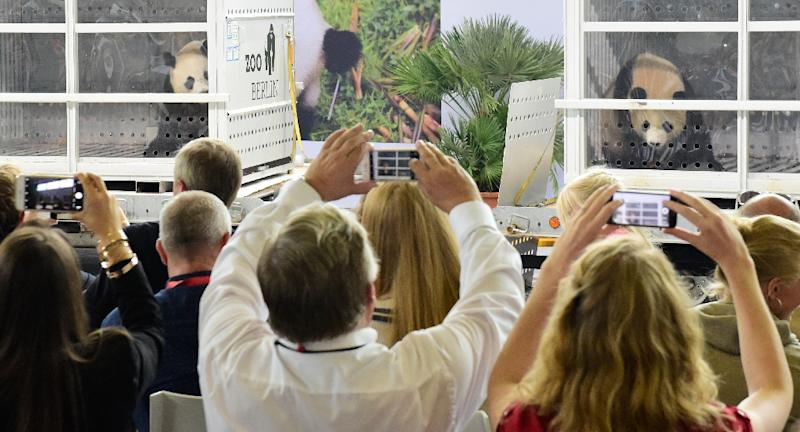 The excitement at the welcome press conference gave the pandas a taste of what might be to come in their new home (AFP Photo/Tobias SCHWARZ                      )