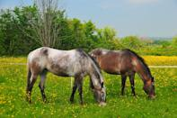"""<p><span>Ever fancied hugging a goat or kissing a horse? Guests at Middlewick Farm Cottages in Glastonbury are encouraged to interact with the animals to promote a feeling of happiness and overall wellbeing. The <a href=""""http://www.farmstay.co.uk/"""" rel=""""nofollow noopener"""" target=""""_blank"""" data-ylk=""""slk:Vital Detox week"""" class=""""link rapid-noclick-resp"""">Vital Detox week</a> also involves a raw-food diet, daily yoga sessions and guided countryside walks. Seven nights' full-board costs from £900pp, including all activities. [Photo: Farm Stay]</span> </p>"""