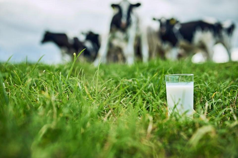 Findings have seen risk increased by a third in women who drink milk (iStock)