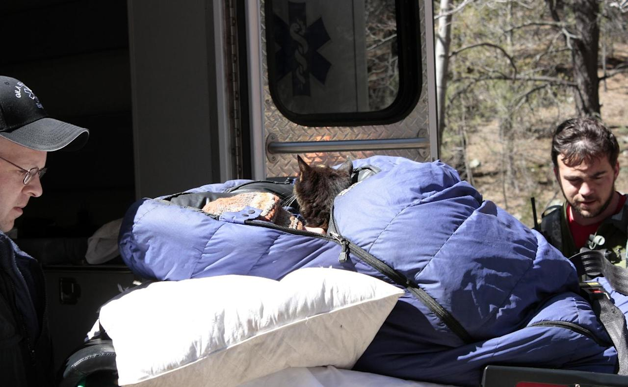 This image provided by David Kuthe shows missing hiker Margaret Page with her cat, being loaded into an ambulance March 7, 2012 inside the Gila National Forest, N.M. Page who had been missing for nearly a month, was found malnourished and emaciated but well-hydrated. Authorities believed she had probably stayed alive by drinking water from a nearby creek (AP Photo/David Kuthe, Glenn Tolhurst)