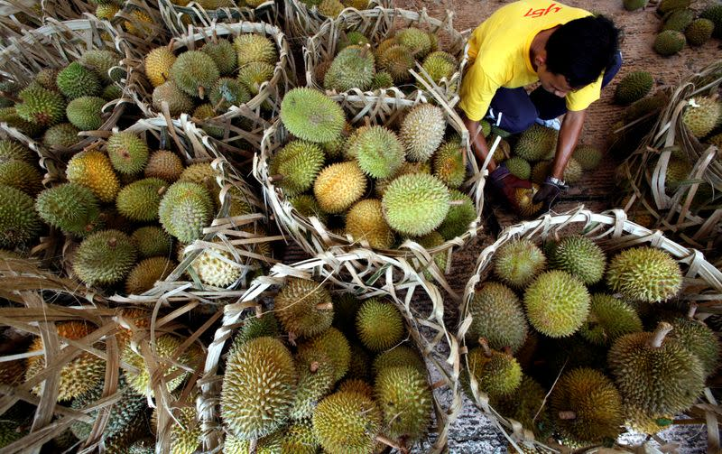 Pungent durian stack up in Malaysia as coronavirus freezes China demand