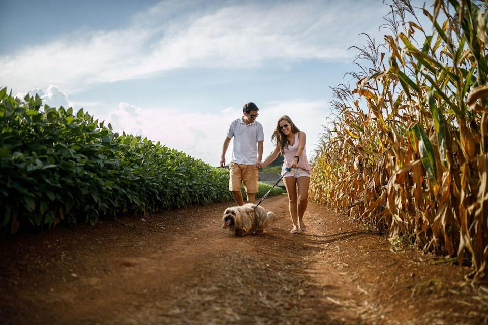 <p>Test your joint problem-solving skills by trying your hand at a corn maze. Some of them sell pumpkins and other fall fare or serve hot cider and snacks or even adult beverages, so you can make a whole day of it. </p>
