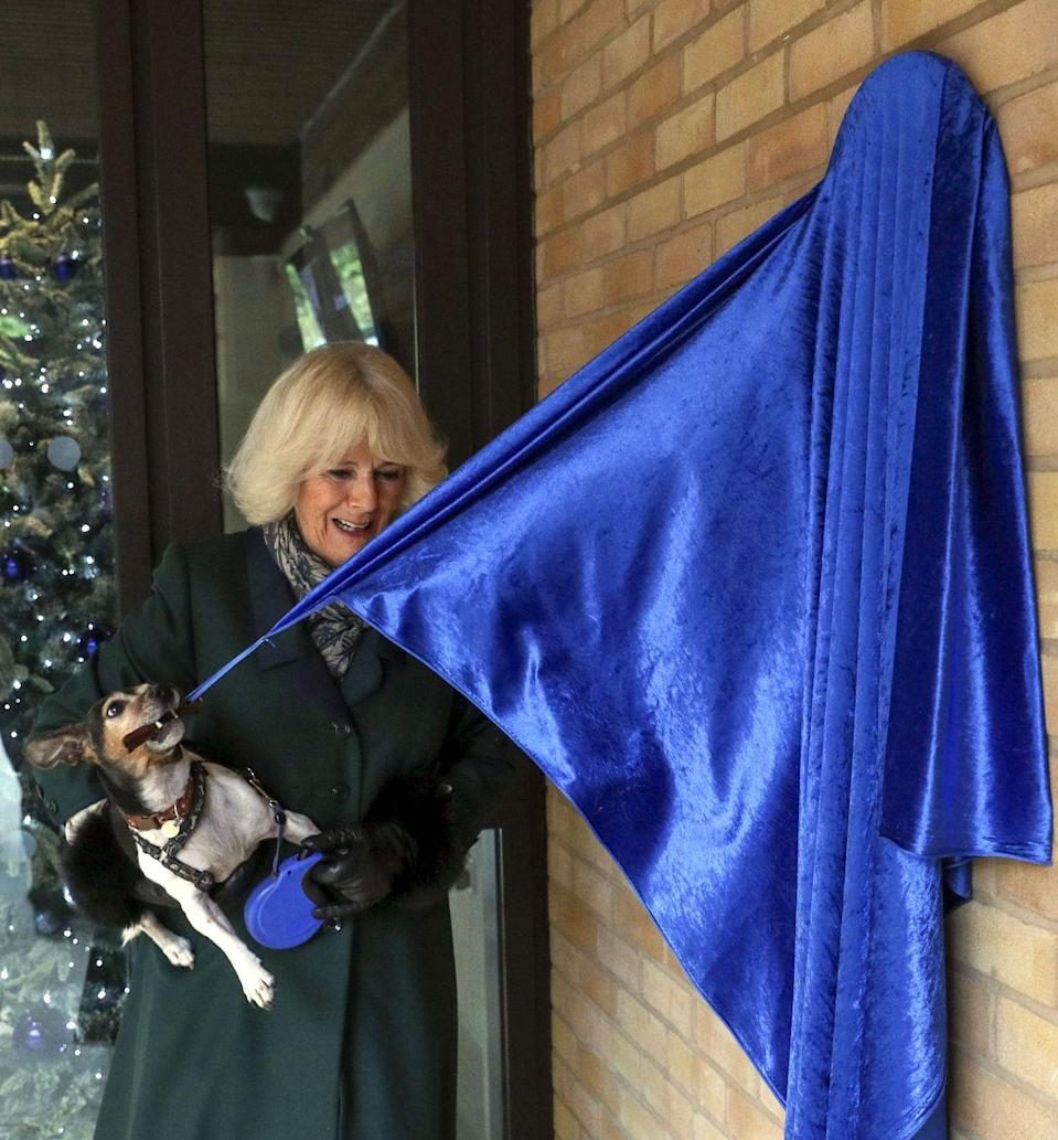 <p>Camilla's jack-russell terrier Beth was the one to unveil a plaque during a visit to the Battersea Dogs and Cats Home.</p>