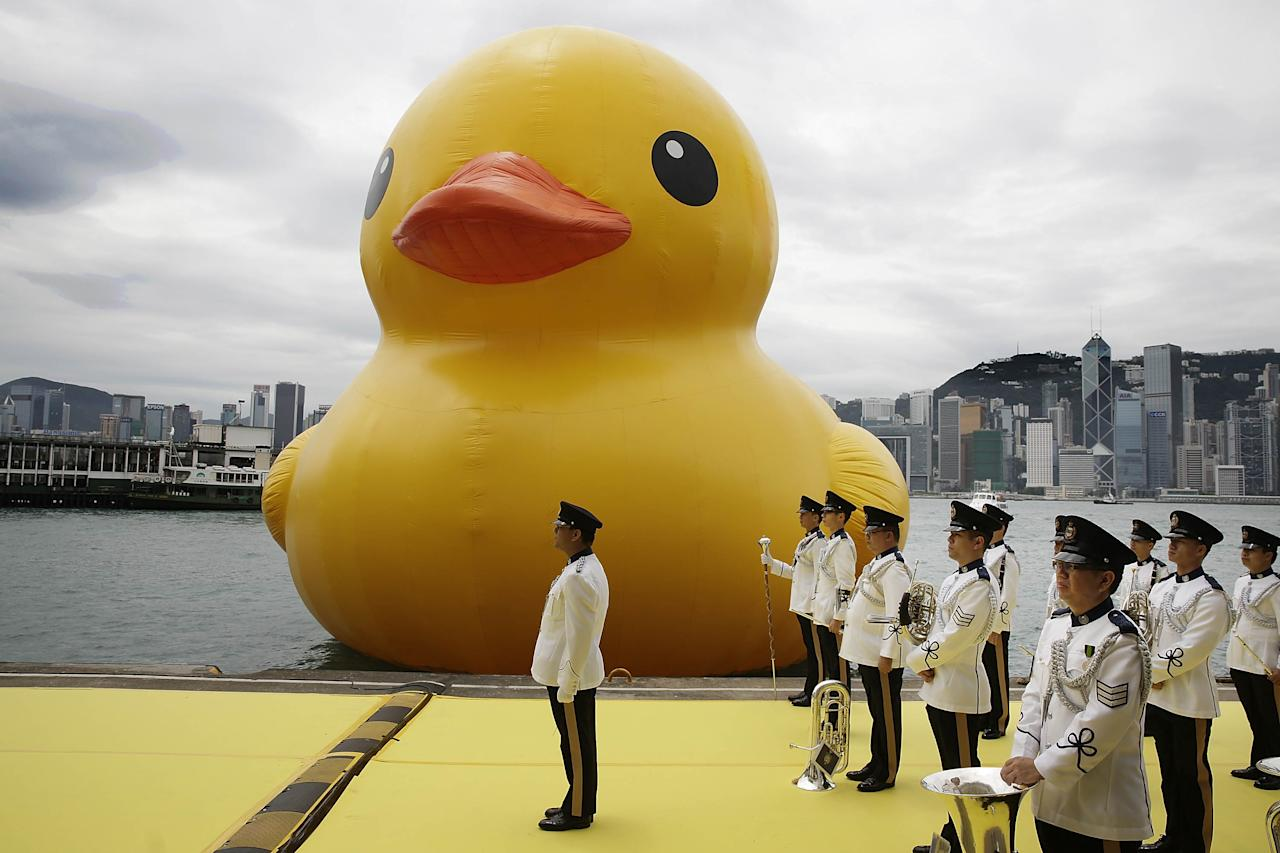 """HONG KONG - MAY 02:  Dutch conceptual artist, Florentijin Hofman's Floating duck sculpture called """"Spreading Joy Around the World"""", is given a welcome ceremony by the Hong Kong Police band as it is moved to the South Side of Ocean Terminal, Victoria Harbour, on May 2, 2013 in Hong Kong. The """"Rubber Duck"""", which is 16.5 meters high, will be in Hong Kong from May 2 to June 9. Since 2007, """"Rubber Duck"""" has been traveling to 10 countries and 12 cities. (Photo by Jessica Hromas/Getty Images)"""