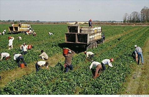 Farmworkers working in a California field.