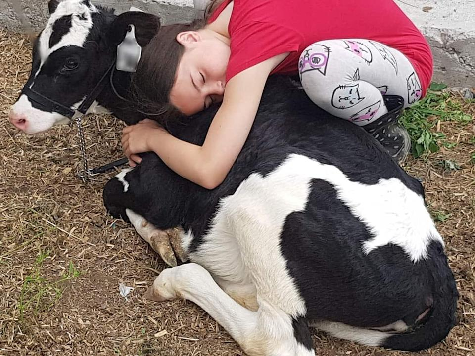 Olive, a six-month-old calf, was going to be sold for meat. Then 11-year-old Zoe Serrati came into her life.  (Submitted by John Serrati - image credit)