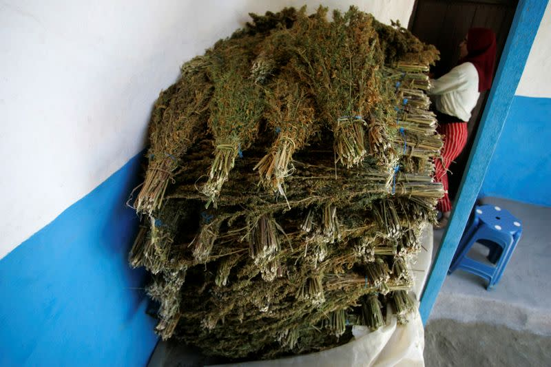 FILE PHOTO: Bundles of marijuana plant are dried at a farmer's house in the Rif region