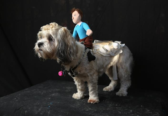 """Frida, a Shih Tsu Poo, poses as Falcor, the magical flying dog-like dragon that transports the main character in """"The Neverending Story"""" at the Tompkins Square Halloween Dog Parade. (Photo by John Moore/Getty Images)"""