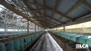 Hundreds of Mink were caged in cruel and inhumane conditions