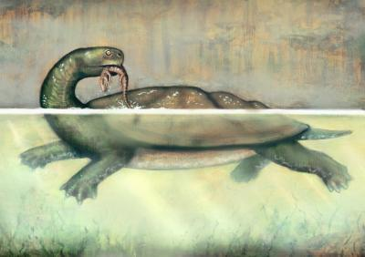 Ancient Turtle Was as Big as Small Car