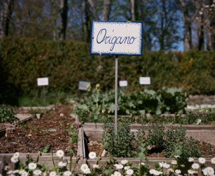 Herbs and other edibles are an increasingly popular lawn alternative. This photo was shot in Italy (hence the spelling of