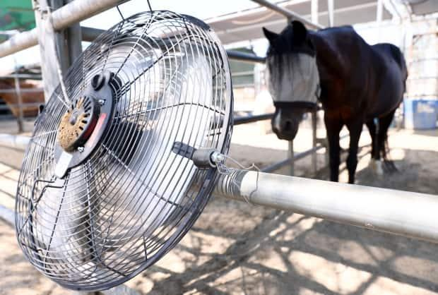 Environment and Climate Change Canada meteorologist Terri Lang says the heat comes with agricultural implications. (Mario Tama/Getty Images - image credit)