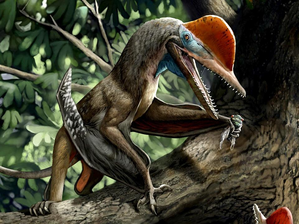 Monkeydactyl is thought to have hunted in the trees (Chuang Zhao)