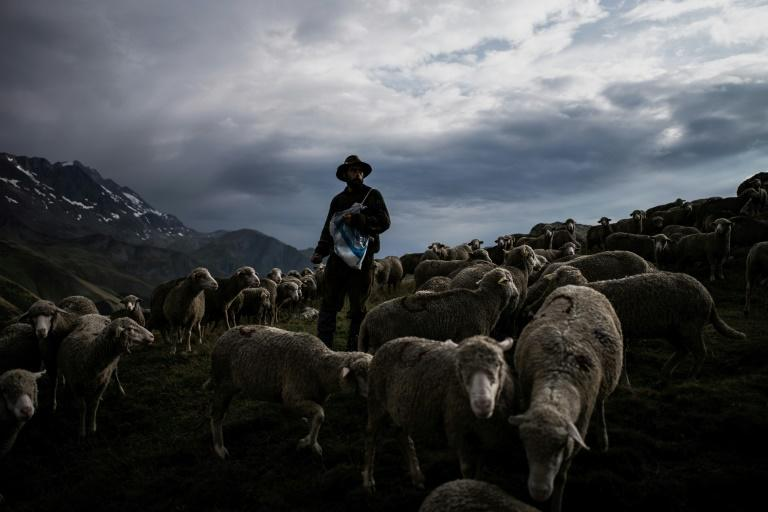 Shepherd Gaetan Meme has just finished his third season of transhumance in the French Alps, or the tradition of guiding livestock up into the alpine pastures to graze and staying with them