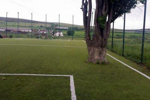 The football pitch, complete with tree.