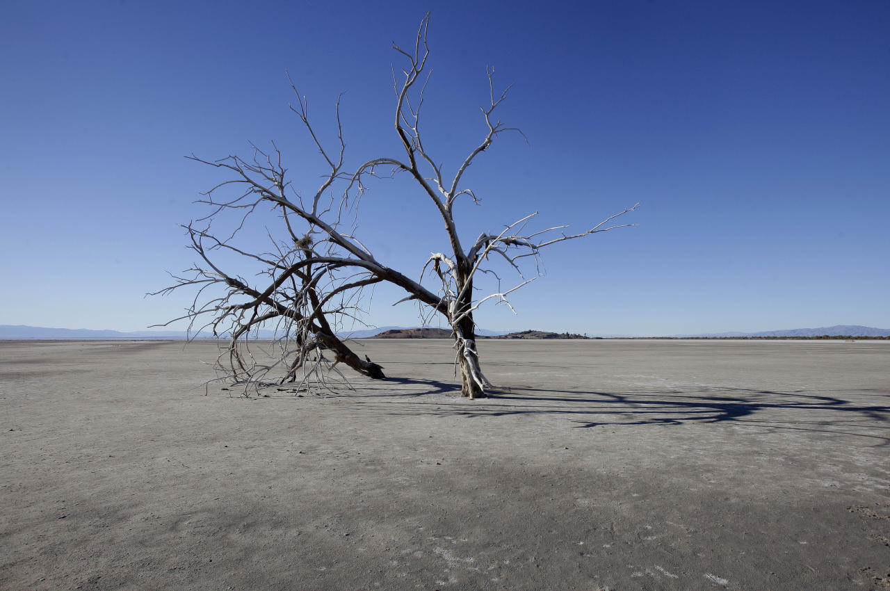 In this Dec. 27, 2010 photo, the barren earth and dead trees reveal the blight of the Salton Sea, where water conservation efforts are attempting to restore the once natural playground and tourist site. The evaporating Salton Sea is the flashpoint for the latest dispute in California's water wars, testing an uneasy alliance that has sought to wean the Golden State from overreliance on Colorado River water.