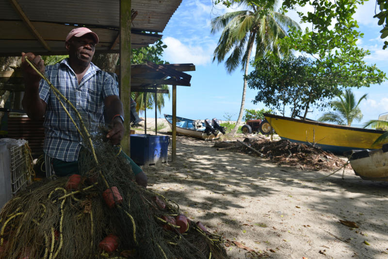 In this May 2, 2013 photo, fisherman Ervan James untangles a net that he says can inadvertently ensnare about six leatherback turtles in a single night at the peak of six-month nesting season, on the beach of the northeast village of Grande Riviere, Trinidad. James, a veteran fishermen from Grande Riviere, recognizes turtle tourism has been a boon for his village, but he and other fishermen are calling for the government to compensate them for not casting wide gill nets during the turtles' nesting season. (AP Photo/David McFadden)