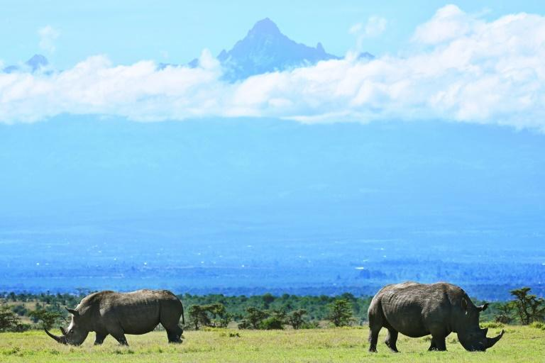 By 2008 the northern white rhino was considered extinct in the wild