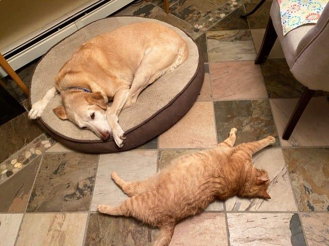 Toby and tigger each have their own beds.