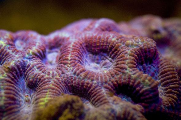 Pictures Bio-fluorescent sea life in the Red Sea