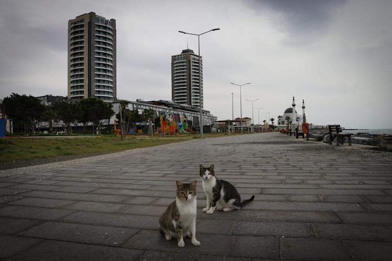 Cats are seen in an empty park located near coastline amid coronavirus pandemic precautions in Iskenderun district of Hatay, Turkey on April 5.