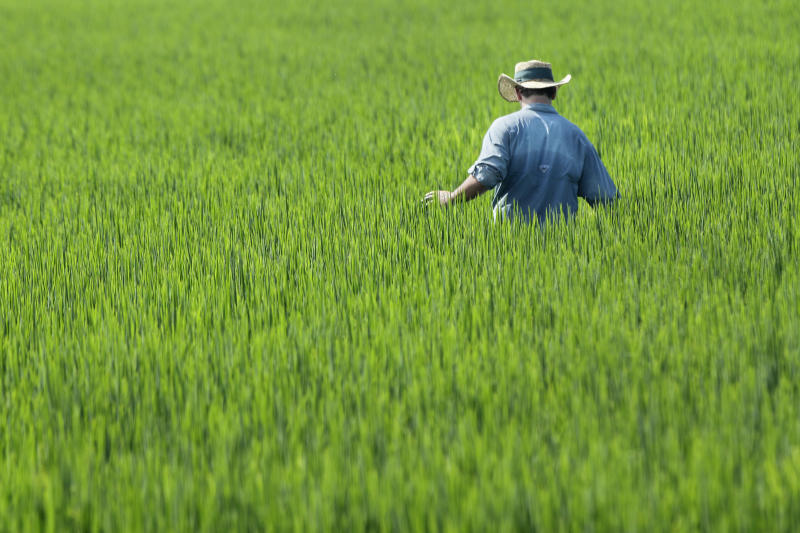 In this photo taken Aug.7, 2013, farmer Ben Burgess examines a rice field near Coy, Ark. A new five-year farm bill could become law as soon as next week. (AP Photo/Danny Johnston)