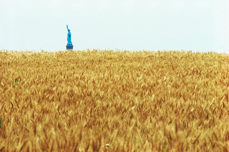 Agnes Denes, Wheatfield – A Confrontation. Two acres of wheat planted and harvested by the artist on the Battery Park landfill, Manhattan, summer 1982. Commissioned by Public Art Fund.