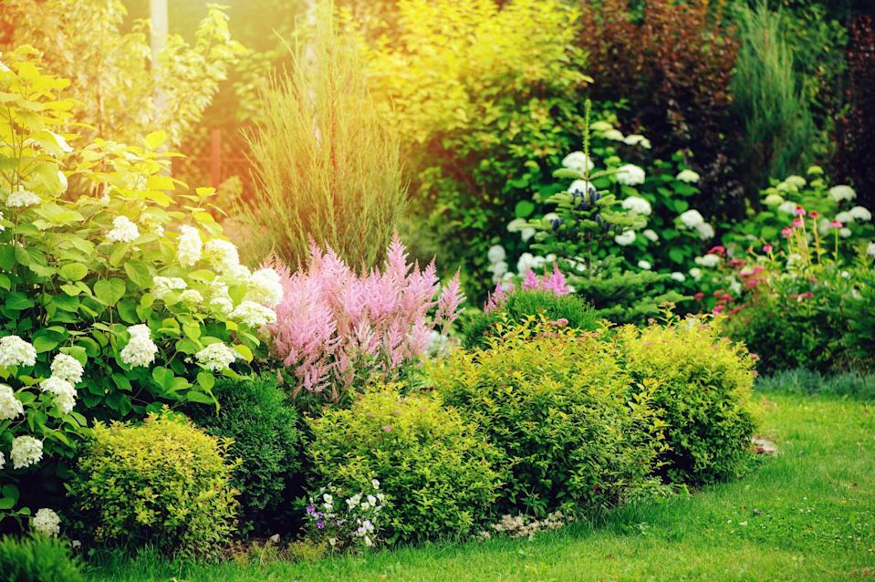 "<p>Even if you don't have a huge yard, you can enjoy the beauty of small shrubs in your <a href=""https://www.thepioneerwoman.com/home-lifestyle/gardening/g32095995/landscaping-ideas/"" rel=""nofollow noopener"" target=""_blank"" data-ylk=""slk:landscaping ideas"" class=""link rapid-noclick-resp"">landscaping ideas</a>, alongside annuals, perennials, and trees. Many small shrubs flower, add color and scent to your garden, <a href=""https://www.thepioneerwoman.com/home-lifestyle/gardening/g35927657/best-pollinator-plants/"" rel=""nofollow noopener"" target=""_blank"" data-ylk=""slk:attract pollinators"" class=""link rapid-noclick-resp"">attract pollinators</a> and wildlife, and provide structure to your garden layout. Small shrubs can also define a boundary or create an outdoor ""room"" to make your space feel more cozy and inviting. Read the plant label or description so you choose a type that will survive winters in your <a href=""https://planthardiness.ars.usda.gov/PHZMWeb/"" rel=""nofollow noopener"" target=""_blank"" data-ylk=""slk:USDA Hardiness Zone"" class=""link rapid-noclick-resp"">USDA Hardiness Zone</a>. Also, make sure you give it the right light: Many require full sun, which is at least six hours of direct sunlight, to look their best and flower. However, some can't take blazing hot afternoon sun, needing morning sun and afternoon shade instead.</p><p>Ready with your <a href=""https://www.thepioneerwoman.com/home-lifestyle/gardening/g35613479/gardening-tools/"" rel=""nofollow noopener"" target=""_blank"" data-ylk=""slk:gardening tools"" class=""link rapid-noclick-resp"">gardening tools</a>, you can plant a shrub by digging a hole two to three times as wide as the plant and setting it in the ground at the same depth it was in the pot. Don't add amendments or potting soil to the hole—research has proven that plants need to learn to survive in the native soil. If you do have clay or poor soil, excavate a larger area, work in some compost (learn <a href=""https://www.thepioneerwoman.com/home-lifestyle/gardening/a32435517/how-to-compost-at-home/"" rel=""nofollow noopener"" target=""_blank"" data-ylk=""slk:how to compost"" class=""link rapid-noclick-resp"">how to compost</a> first if you don't already!), and then plant your shrub. Make sure to water well after planting and then regularly for the first or second season as your plant gets established. Finally, if bunnies are an issue in your garden, fence your shrub off with some chicken wire for the first year or two. Otherwise, your little furry friends may nibble the new shoots down to the ground! </p><p>Now that you're prepared with all the information you need, figure out which small shrubs will be best for your garden.</p>"
